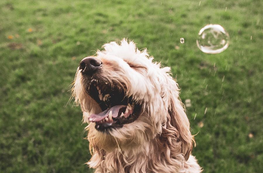 bańki mydlane z psem